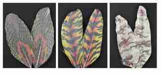 Printed Feathers Assortment Snake Skin/Tiger Stripe/Camo