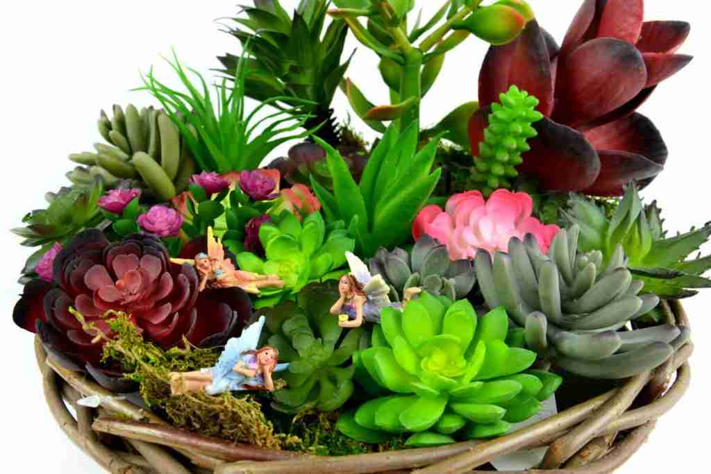 Succulents and fairies