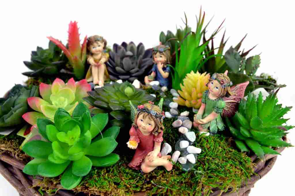 Succulents and girls